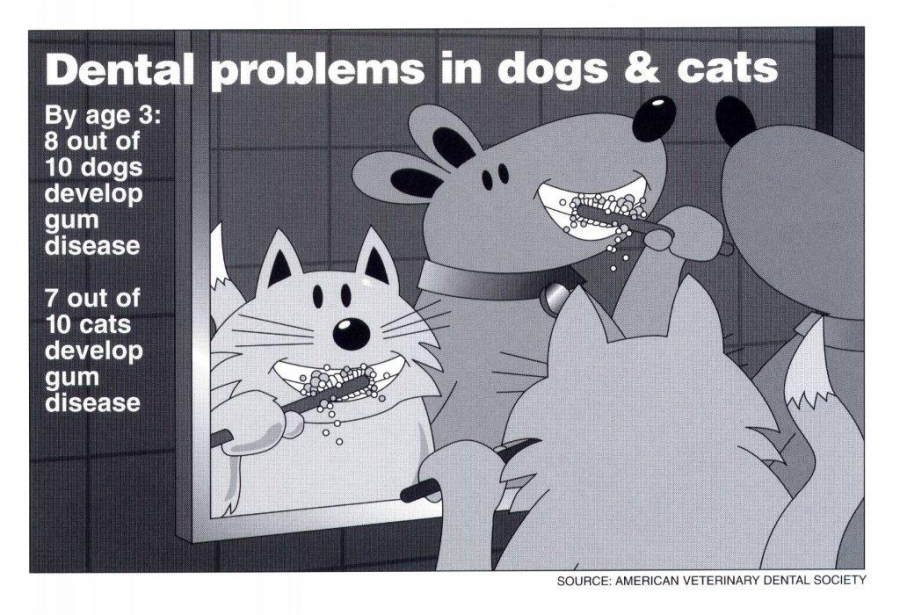 Animal Medical Clinic of Chesapeake 23320 - Dental Problems in Dogs and Cats