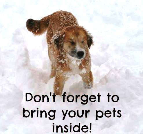 Animal Medical Clinic of Chesapeake 23320 - Don't forget to bring your pets inside