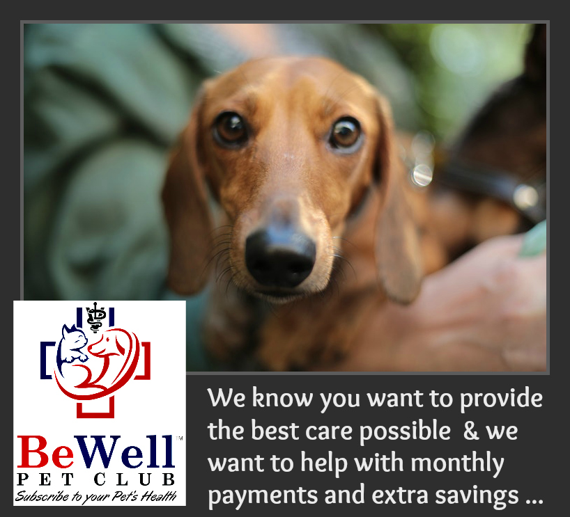 Animal Medical Clinic of Chesapeake 921 Battlefield Blvd, Chesapeake, Va 23320 offers Affordable Pet Wellness Plans
