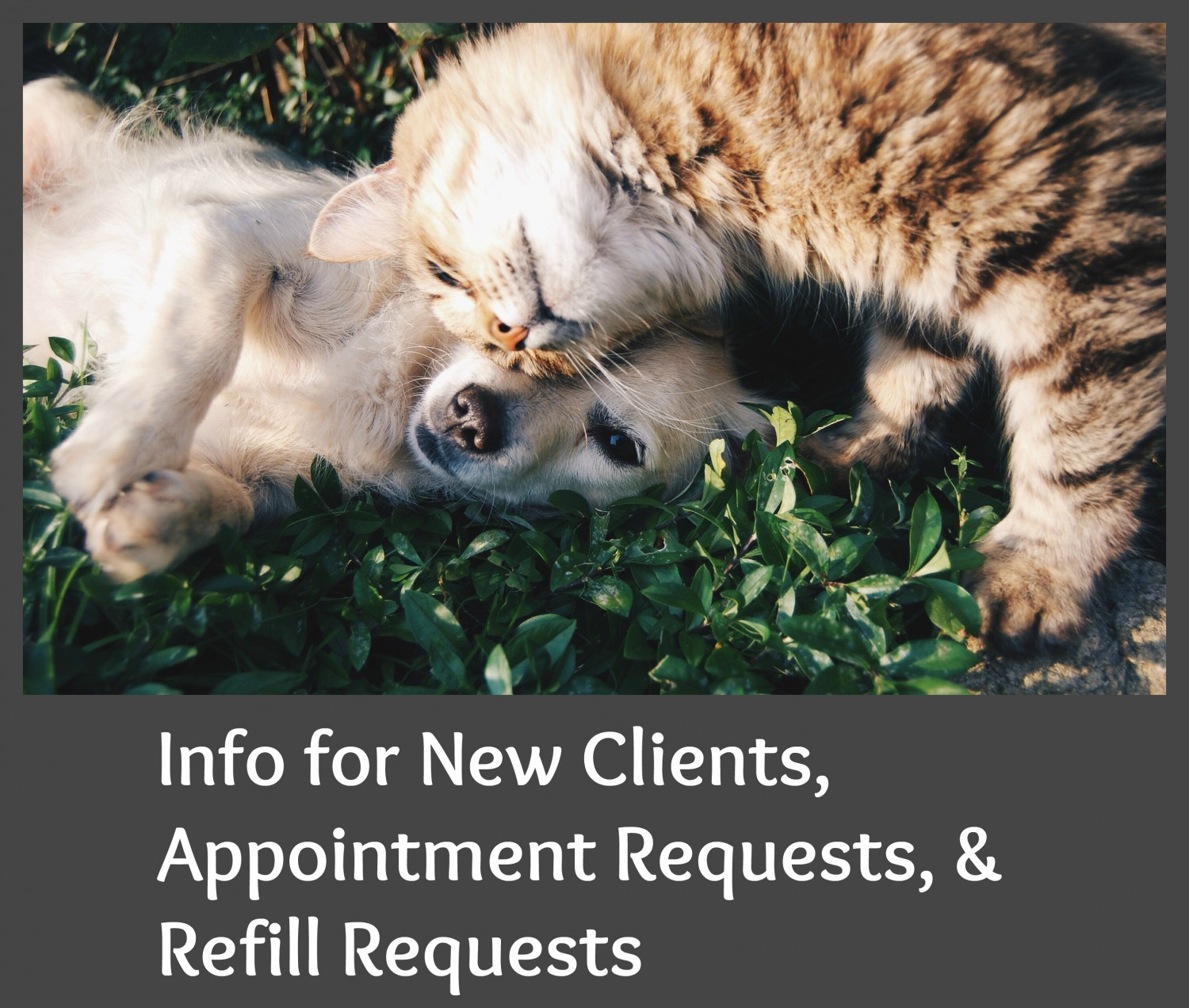 Animal Medical Clinic of Chesapeake 921 Battlefield Blvd, Chesapeake, Va 23320 New Client Appointments Refill Requests