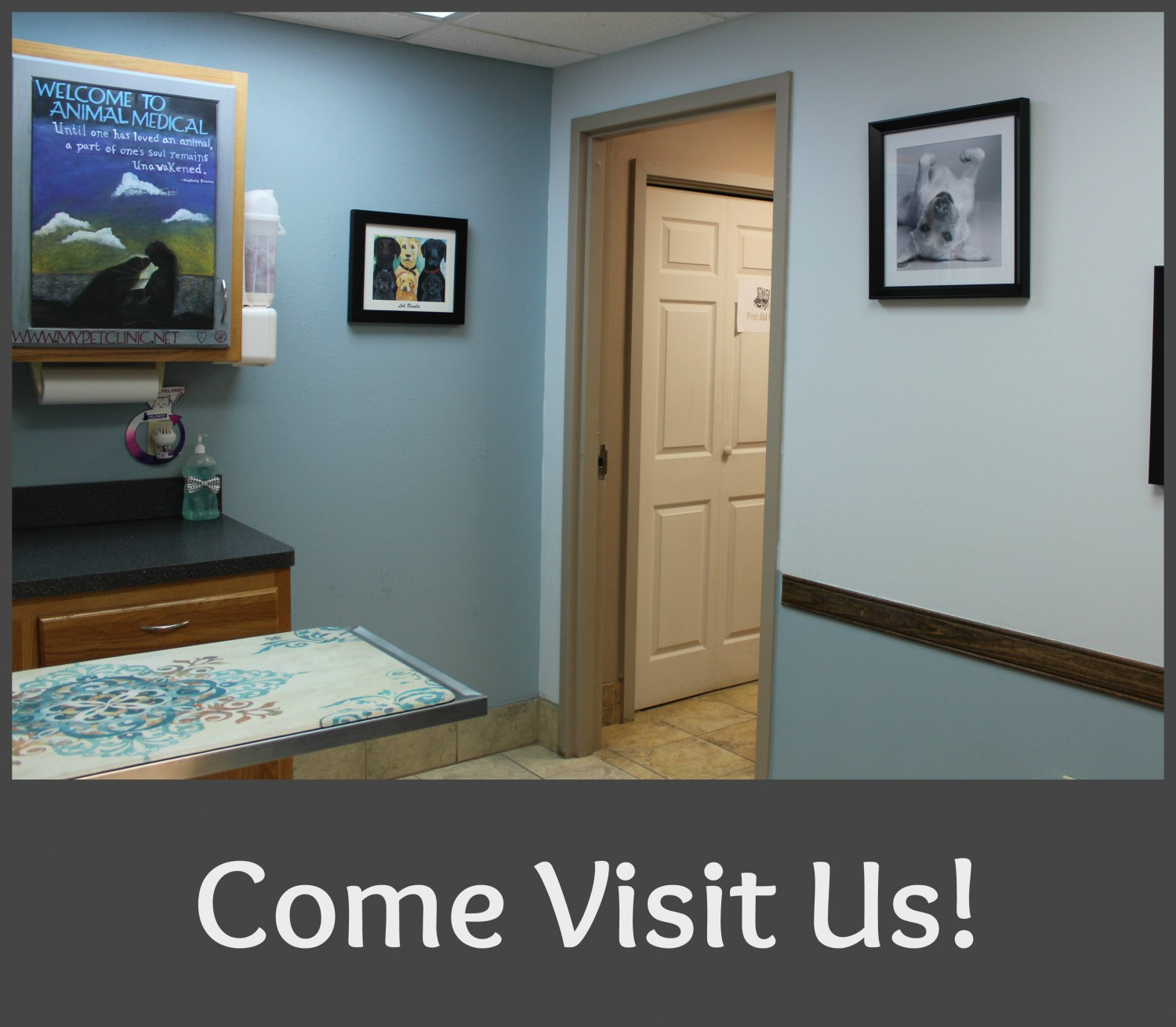Animal Medical of Chesapeake Veterinary Hospital, 921 Battlefield Blvd, Chesapeake, Va 23320 welcomes you to visit us and leave a Review
